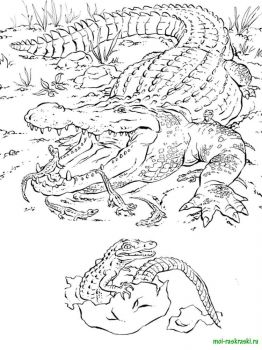 wild-animal-coloring-pages-43