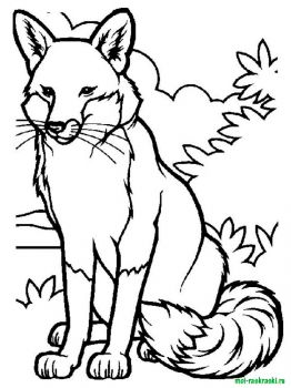 wild-animal-coloring-pages-6
