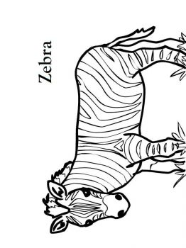 coloring-pages-animals-zebra-12