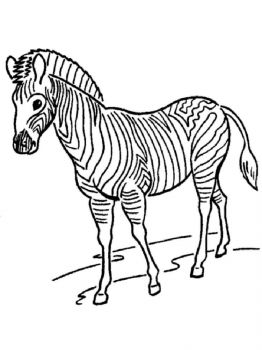 coloring-pages-animals-zebra-14