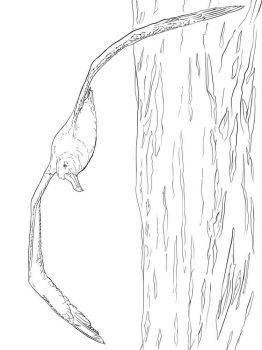Albatross-birds-coloring-pages-11