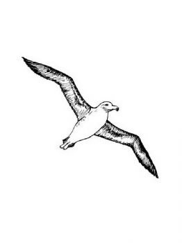 Albatross-birds-coloring-pages-14