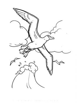 Albatross-birds-coloring-pages-2