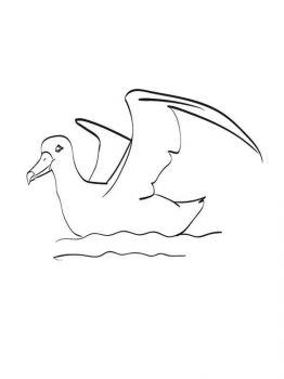 Albatross-birds-coloring-pages-3