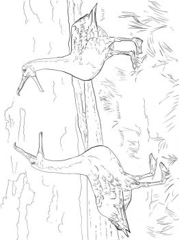 Albatross-birds-coloring-pages-5