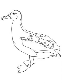 Albatross-birds-coloring-pages-6