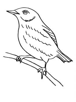 Blackbird-birds-coloring-pages-1