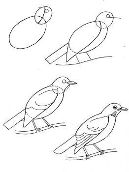Blackbird-birds-coloring-pages-2