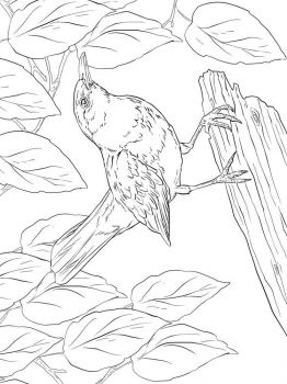 Blackbird-birds-coloring-pages-5