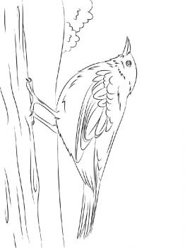 Blackbird-birds-coloring-pages-6