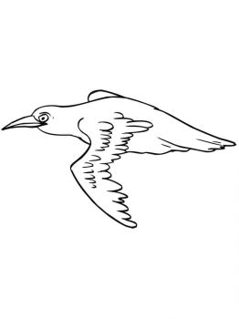 Blackbird-birds-coloring-pages-8