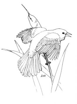 Blackbird-birds-coloring-pages-9
