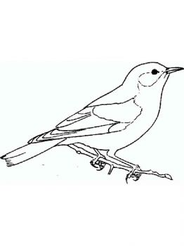Bluebird-birds-coloring-pages-11