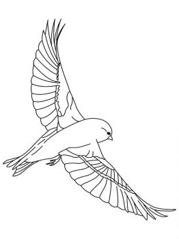 Canary-birds-coloring-pages-4