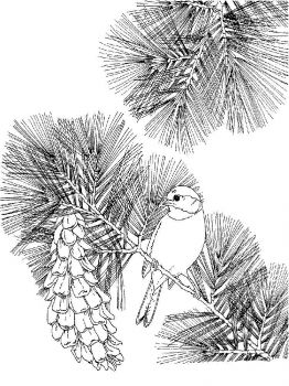 Chickadee-birds-coloring-pages-5