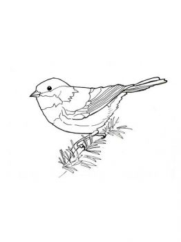 Chickadee-birds-coloring-pages-6