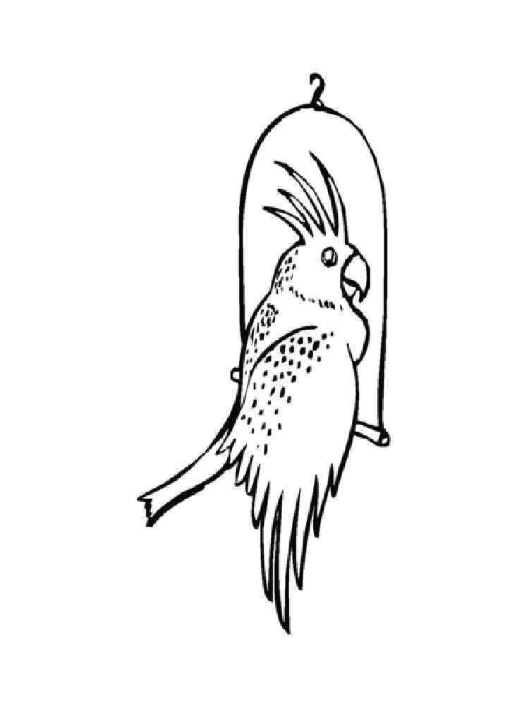 ausmalbilder kakadus  malvorlagen kostenlos zum ausdrucken