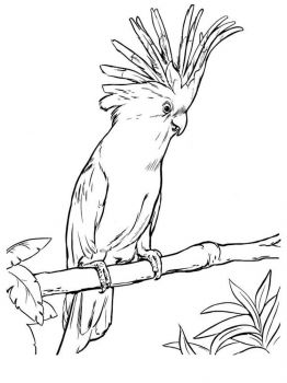 Cockatoos-birds-coloring-pages-1