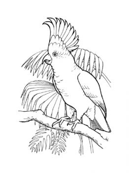 Cockatoos-birds-coloring-pages-11