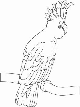 Cockatoos-birds-coloring-pages-2