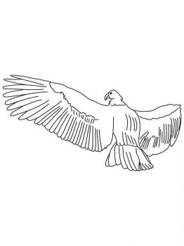 Condors-birds-coloring-pages-7