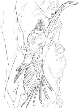 Condors-birds-coloring-pages-8