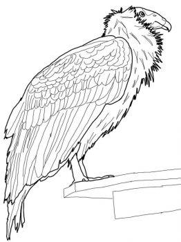 ausmalbilder kondor - malvorlagen kostenlos zum ausdrucken