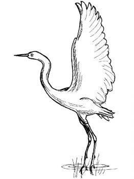 Cranes-birds-coloring-pages-13