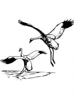 Cranes-birds-coloring-pages-17