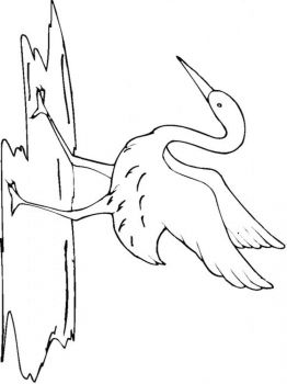 Cranes-birds-coloring-pages-4