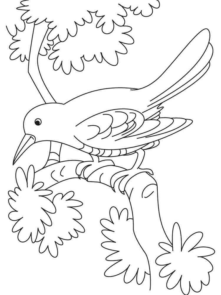 ausmalbilder krähe  malvorlagen kostenlos zum ausdrucken