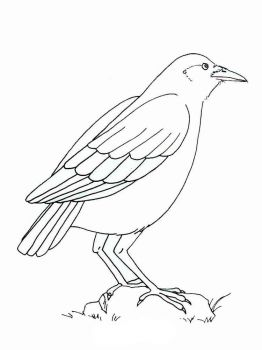 Crows-birds-coloring-pages-1