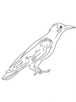 Crows-birds-coloring-pages-10
