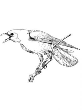 Crows-birds-coloring-pages-4