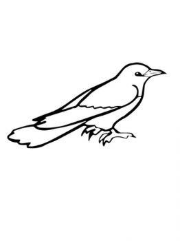 Cuckoos-birds-coloring-pages-1