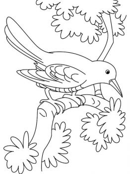 Cuckoos-birds-coloring-pages-2