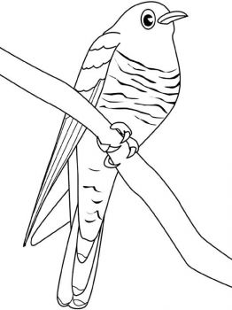 Cuckoos-birds-coloring-pages-3