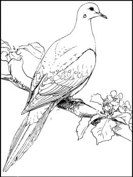 Doves-birds-coloring-pages-11
