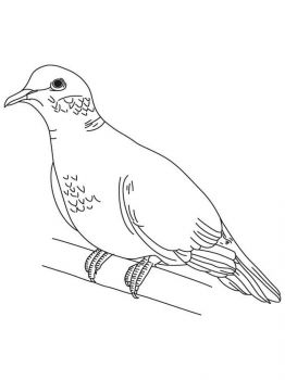 Doves-birds-coloring-pages-4