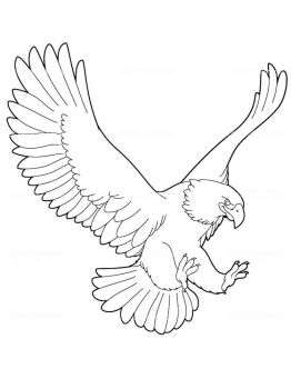 Eagle-birds-coloring-pages-13