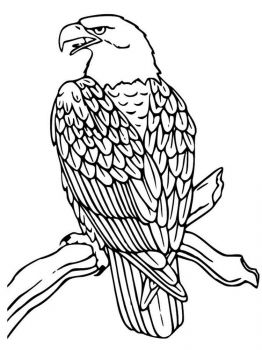 Eagle-birds-coloring-pages-17