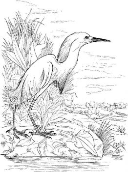 Egrets-birds-coloring-pages-7