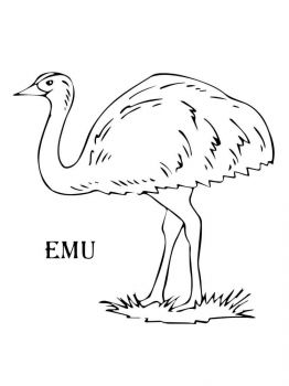 Emu-birds-coloring-pages-7