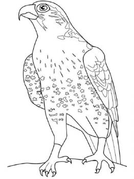 Falcons-birds-coloring-pages-13