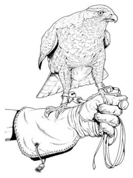 Falcons-birds-coloring-pages-5