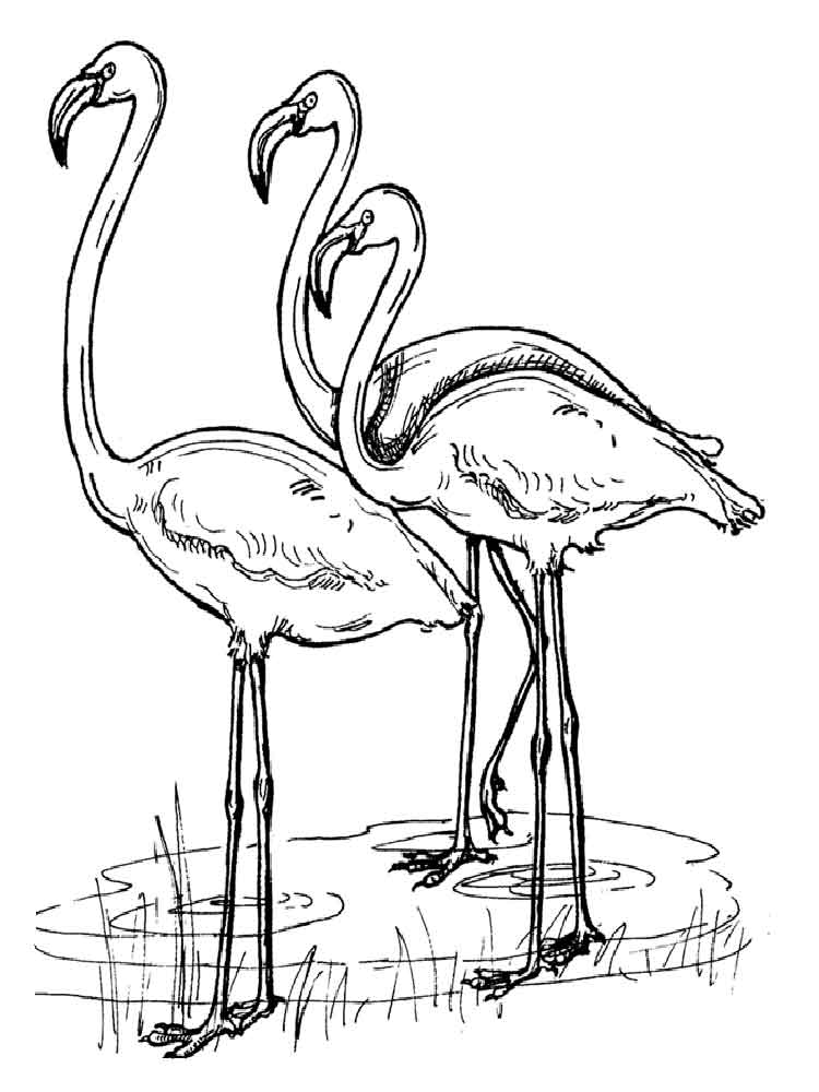 ausmalbilder flamingos  malvorlagen kostenlos zum ausdrucken