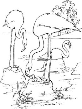 Flamingos-birds-coloring-pages-14
