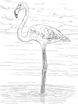 Flamingos-birds-coloring-pages-15