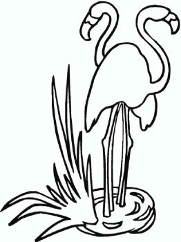 Flamingos-birds-coloring-pages-19