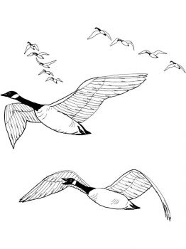 Gooses-birds-coloring-pages-20